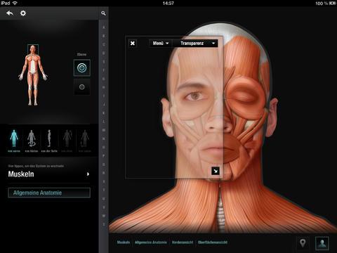 скачать приложение анатомия - фото 9